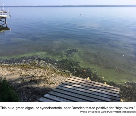 Two HABs confirmed in Seneca Lake near Dresden