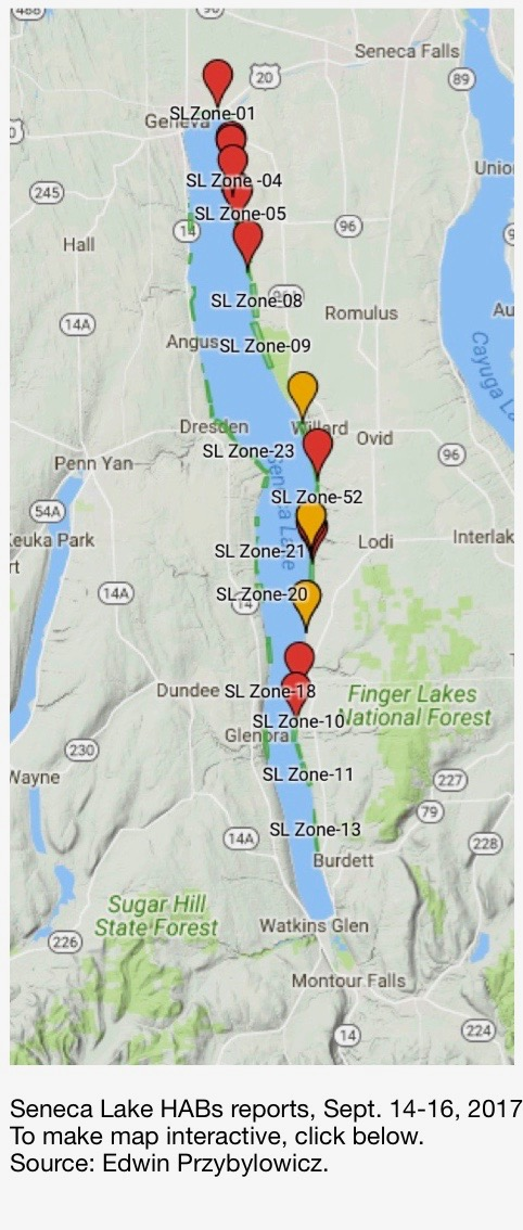 Harmful Algae Blooms Threaten All 11 NY Finger Lakes — An Unwelcome ...