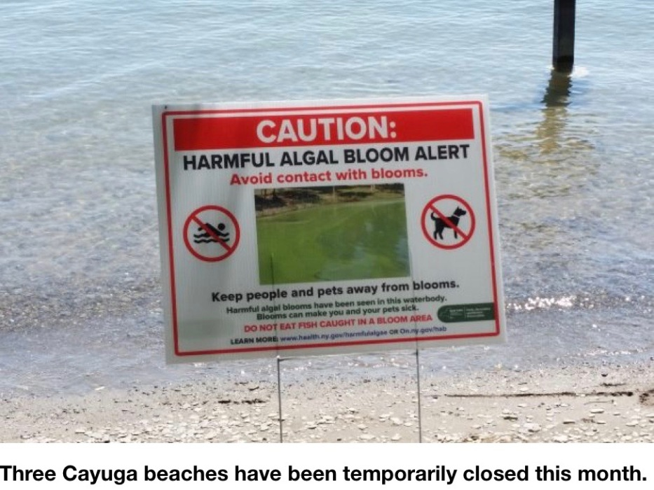HABs strike Cayuga Lake earlier than last year, but no 'high toxins' yet