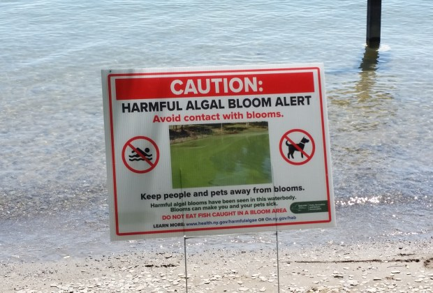 Cayuga Lake hit with 33 toxic algae blooms; none reported yet on Seneca, Canandaigua, or Owasco